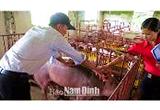 Kết Quả Bước Đầu Của Chương Trình Quản Lý Lợn Đực Giống