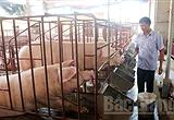 Phòng bệnh cho đàn vật nuôi mùa nắng nóng: Nhiều hộ dân còn xem nhẹ