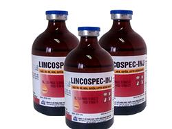 Đặc trị ho, hen, suyễn, Lepto (bệnh nghệ) - LINCOSPEC - INJ