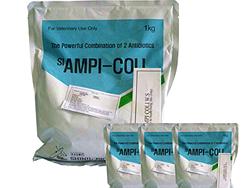 Đặc trị tụ huyết trùng, tiêu chảy - AMPI-COLI
