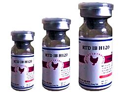 RTD IB H120